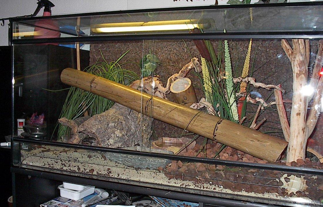 Boa Constrictor Boa Constrictor Vivarium Boa